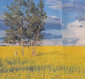 Tree Canola Fold 3-100